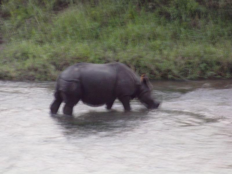 Le parc de Chitwan dans le Téraï imag0275